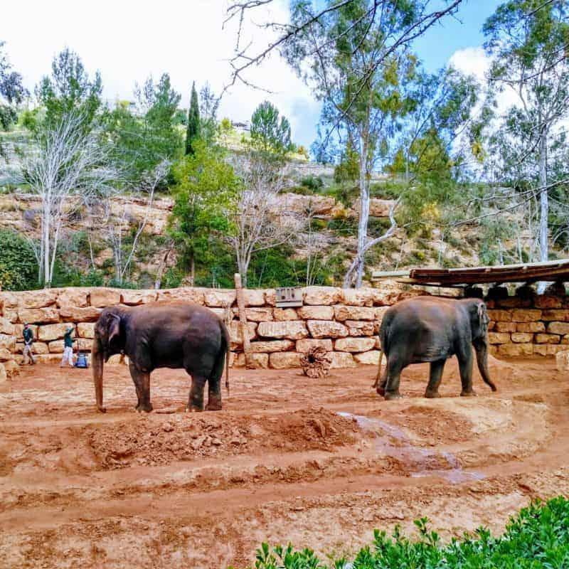 Jerusalem Biblical Zoo, Israel